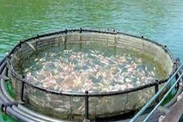 صورة الزراعة: مصر تحتل المركز الثامن عالمياً والأول إفريقياً في الاستزراع السمكي.. صور