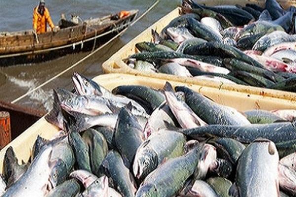 صورة تنمية الثروة السمكية: مصر تنتج 1.3 مليون طن أسماك سنويا