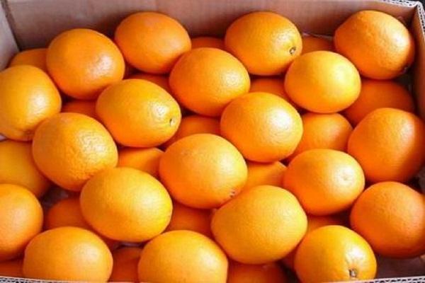 """صورة رسميا..  """"الزراعة"""" تنجح في فتح سوق جديدة للموالح المصرية في فيتنام"""
