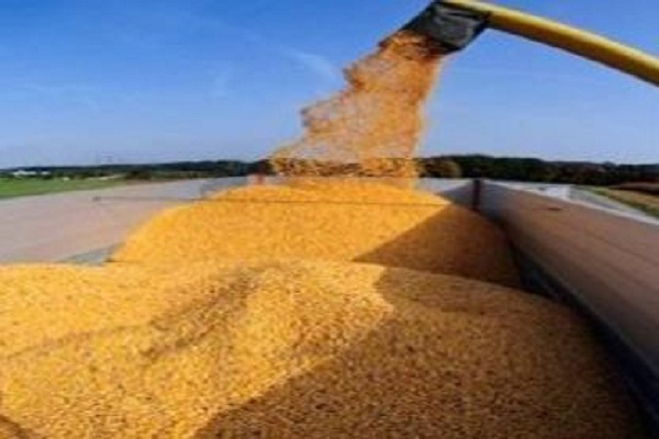 صورة الصين تسمح باستيراد القمح الروسي من ست مقاطعات