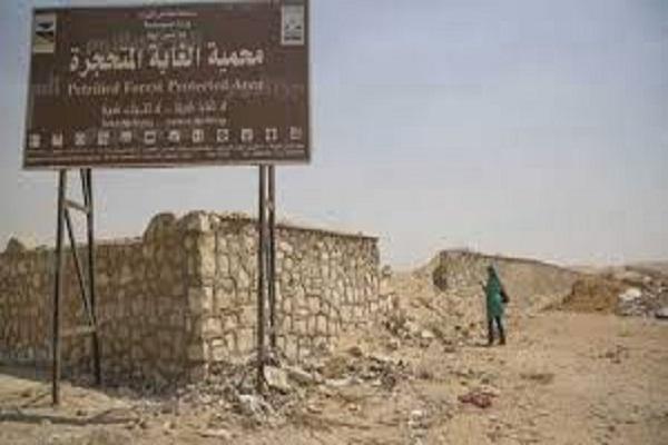 صورة معلومات الوزراء: لا صحة لإتجاه الحكومة لبيع أرض محمية الغابة المتحجرة بالقاهرة الجديدة