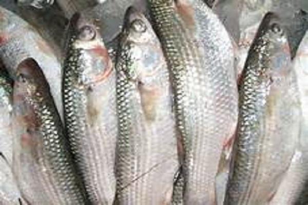 صورة أسعار الأسماك اليوم الاحد 29 نوفمبر 2020