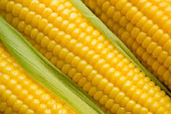 صورة اسعار الذرة الصفراء اليوم الأثنين 15 مارس 2021