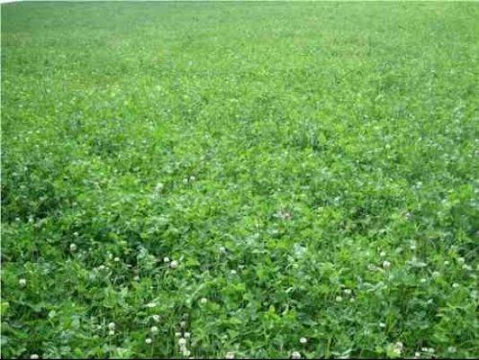 صورة توصيات فنية لمزارعي محاصيل الأعلاف الخضراء الشتوية والصيفية خلال شهر سبتمبر