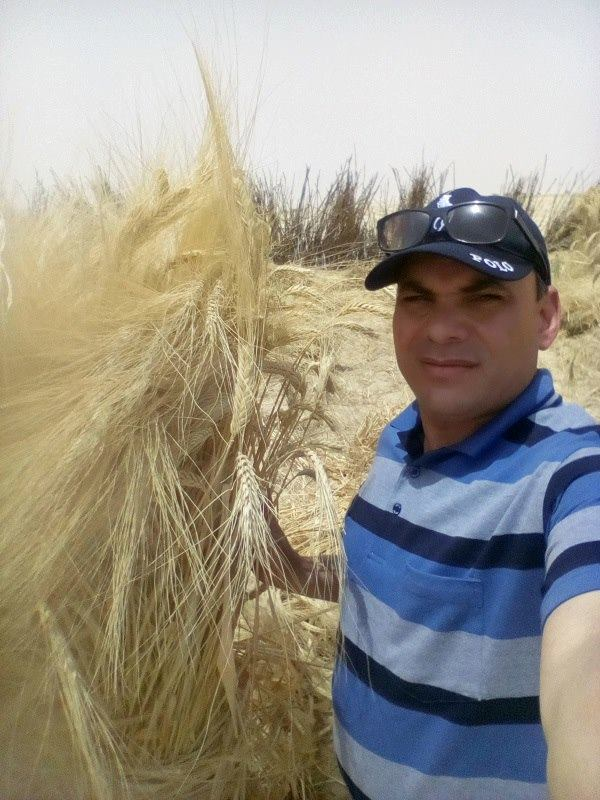 صورة الدكتور محمد فهيم يكتب : محددات هامة بمناسبة موسم زراعة القمح