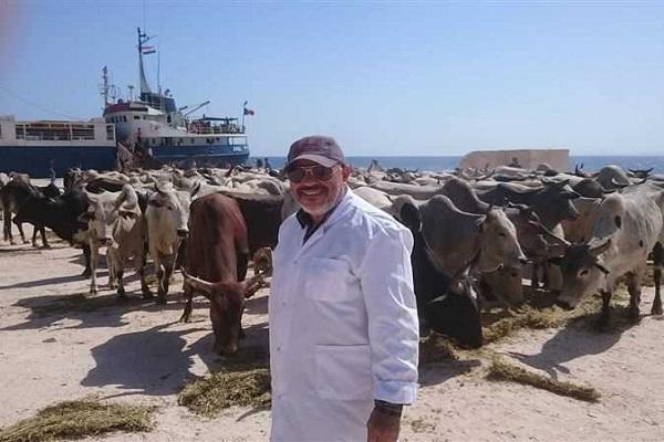 """صورة بمناسبة عيد الأضحى .. """"الزراعة """" : استيراد 96 ألف رأس عجول أبقار و 70 ألف رأس أغنام"""