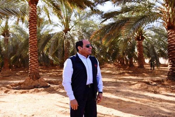 صورة نقيب الفلاحين: مصر السيسي حققت مكاسب غير مسبوقه في القطاع الزراعي