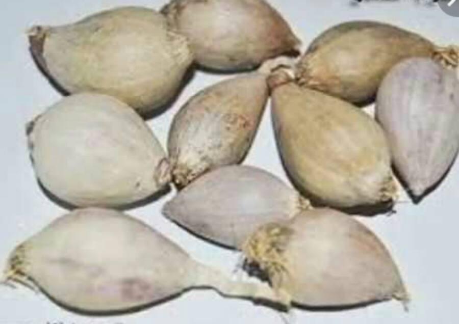 يحتوى على كمية هائلة من الفيتامينات 10 فوائد للثوم الذكر وطريق زراعته والحصول عليه بوابة الزراعة