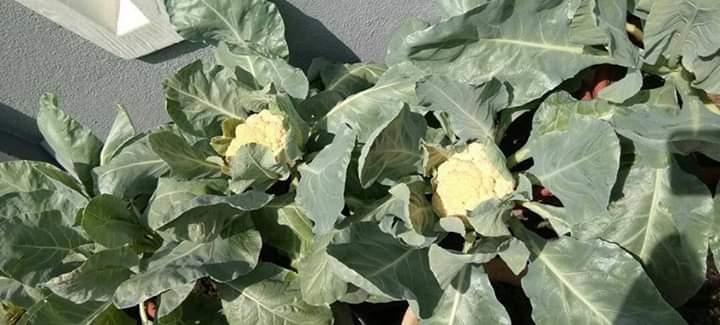 صورة ماذا نزرع في فصل الخريف ؟