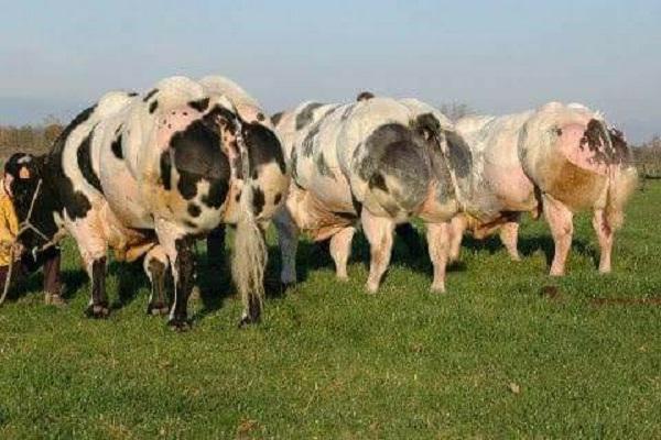 صورة من الألف إلى الياء ..لمربى عجول التسمين .. تعرف على 8 شروط لنجاح مشروعات الثروة الحيوانية