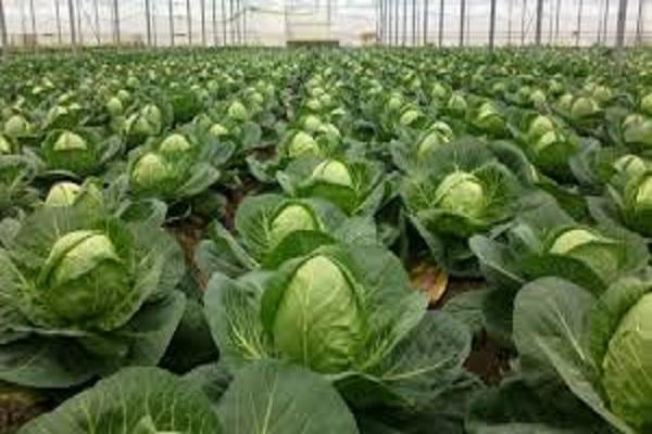 صورة ماذا تزرع في فصل الخريف .. تعرف على قائمة المحاصيل  ؟؟