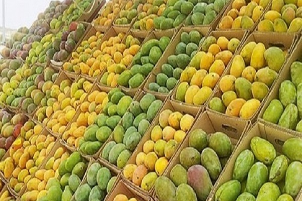 صورة اسعار المانجو فى سوق العبور اليوم 19 – 10 – 2019