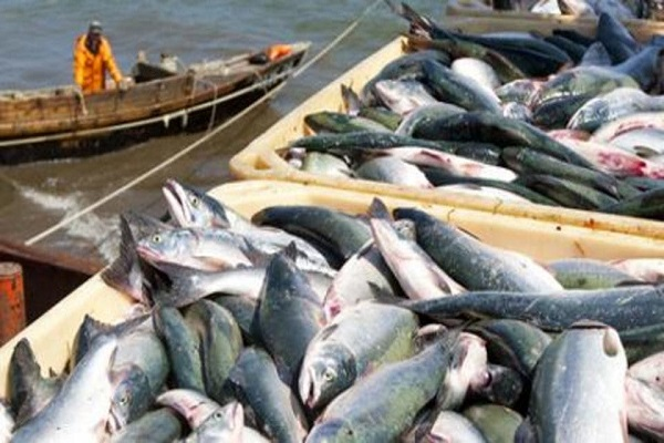 صورة أسعار الأسماك اليوم السبت 22 مايو 2021 بسوق العبور