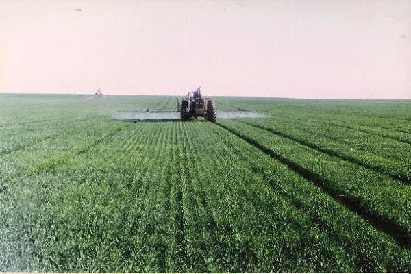 صورة مع بداية زراعة المحصول .. أخطاء يجب تجنبها عند رى وتسميد القمح