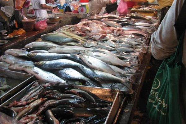 صورة اسعار الاسماك اليوم الاربعاء 11مارس 2020