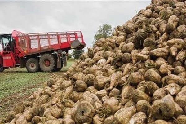 """صورة وزير الزراعة يتواصل مع شركات السكر لحل أزمة توريد البنجر بالتنسيق مع """" التموين"""""""