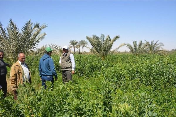 صورة توصيات لمزراعي الخضر والفاكهة لمواجهة الحرارة المرتفعة والرطوبة خلال أغسطس