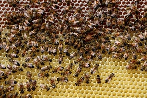 صورة لمربى النحل.. تعرف على الوصايا العشر لمواجهة الظروف الجوية المتقلبة