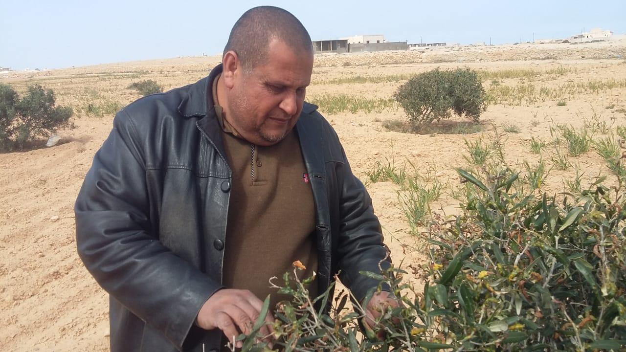 صورة الدكتور وائل غيث يكتب : إدارة عمليات النمو الخضري و التزهير والعقد لأشجار الزيتون