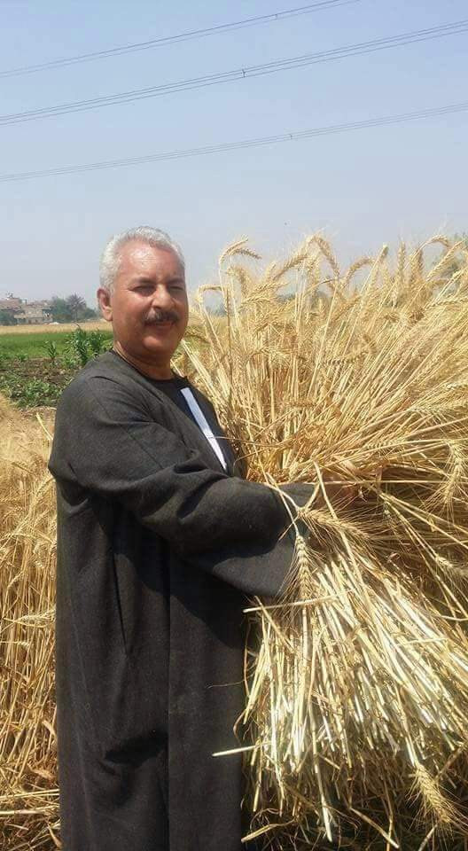 صورة نقيب الفلاحين  : انخفاص أجرة العماله الزراعيه لحصاد القمح