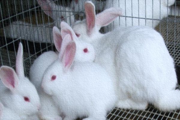 صورة الدكتورة إيمان محروس تكتب :التوصيف الجزيئي للباستريلا ملتوسيدا المعزولة من الأرانب