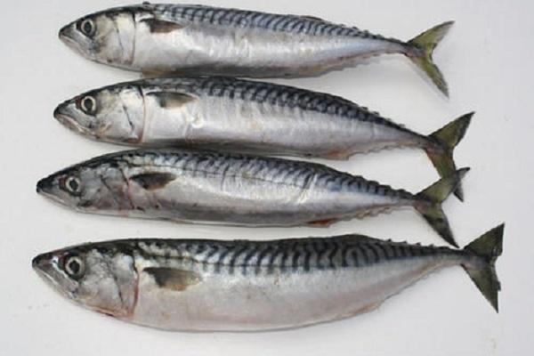 صورة أسعار الأسماك اليوم الثلاثاء 6 ابريل 2021 بسوق العبور