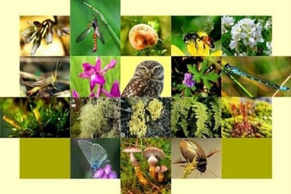 صورة مسؤول بيئي : التنوع البيولوجي في المنطقة المتوسطية في خطر