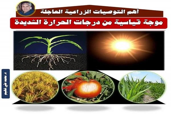 صورة رسائل الدكتور محمد فهيم ..احذر- انتبه – ركز .. موجة حارة شديدة طويلة قياسية تضرب البلاد