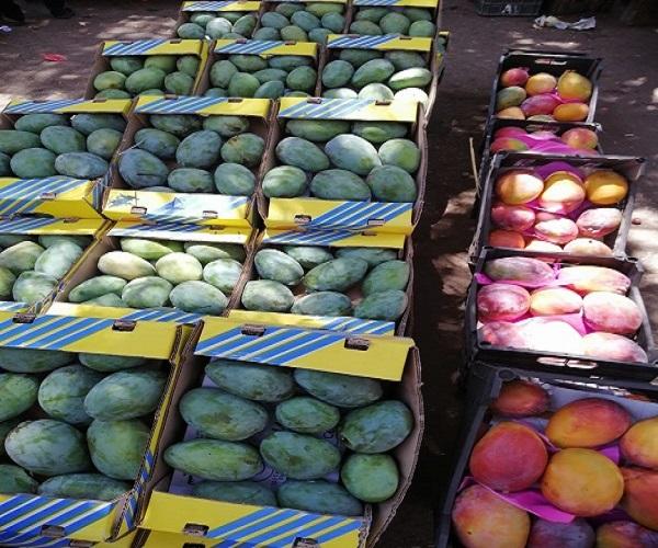صورة ارتفاع صادرات مصر الزراعية لـ أكثر من 3.9 مليون طن والبطاطس تحتل المركز الثاني بعد الموالح
