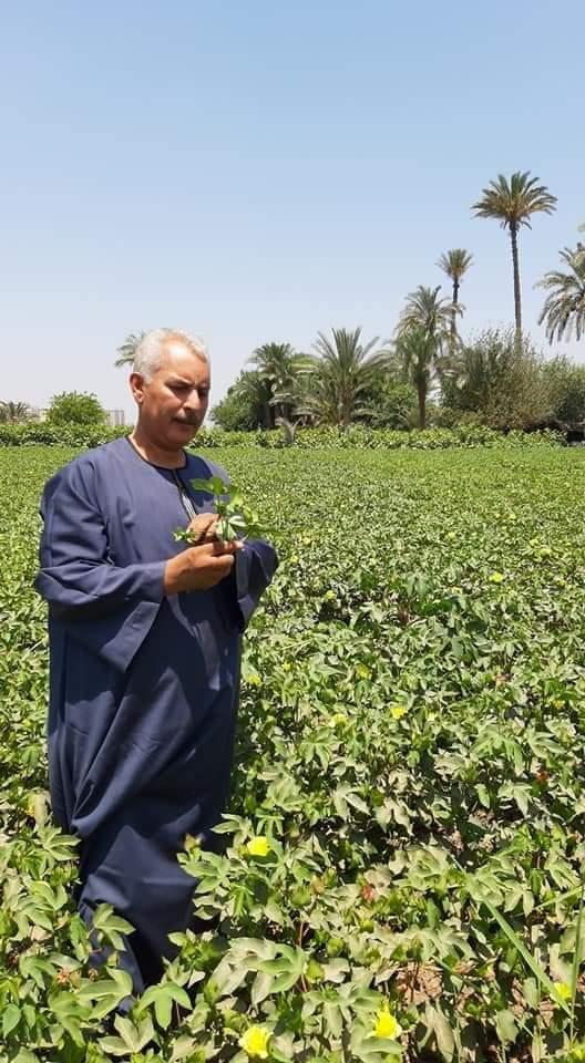 صورة نقيب الفلاحين: لايمكن وقف تعديات الاراضي الزراعبه بالتوازي مع تهميش الفلاح