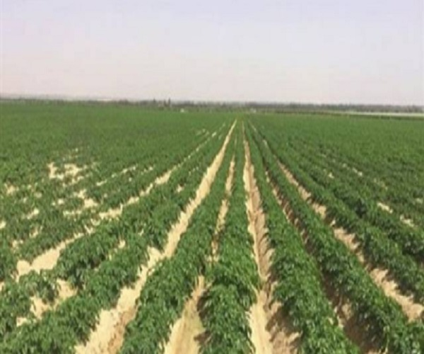 صورة بشرى سارة للشباب .. تخصيص 10 أفدنة لخريجى الزراعة والطب البيطرى بالوادى الجديد (تفاصيل)