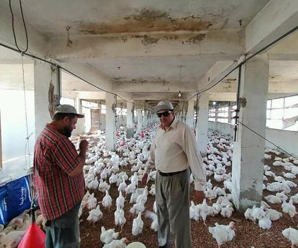 صورة بالصور .. إعادة تشغيل مزرعتين للدواجن بدمياط بعد فترة طويلة من التوقف