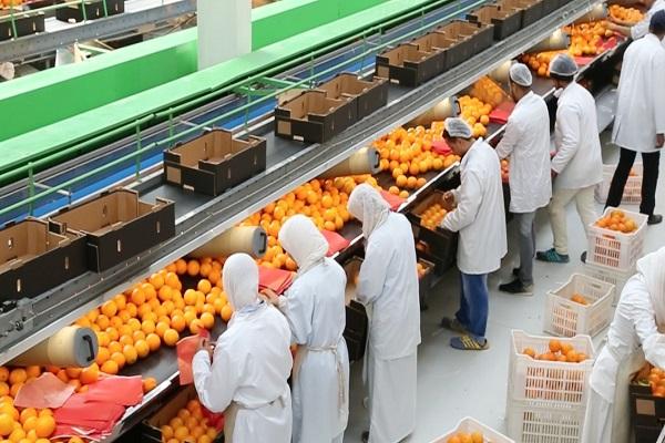صورة وزير الزراعة : طفرة فى الصادرات بإجمالى 5.2 مليون طن بقيمة  2.2 مليار دولار