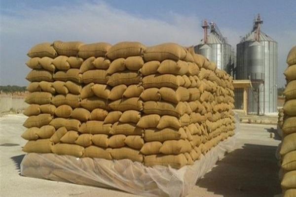 صورة مطالب برفع سعر توريد أردب القمح إلى 850 جنيها