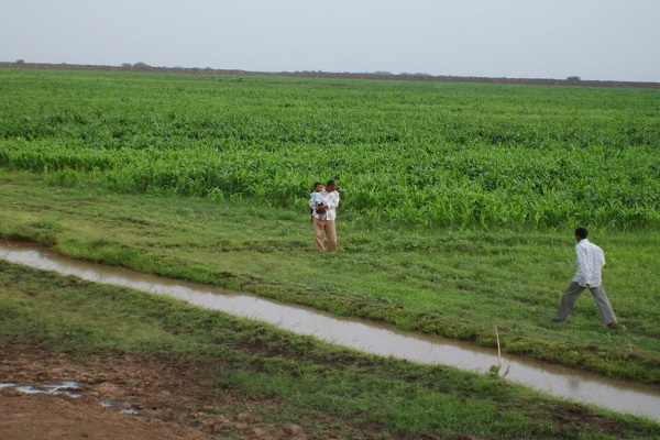 صورة السودان .. مزارعو الجزيرة :خفض الرسوم الإدارية والري خطوة موفقة