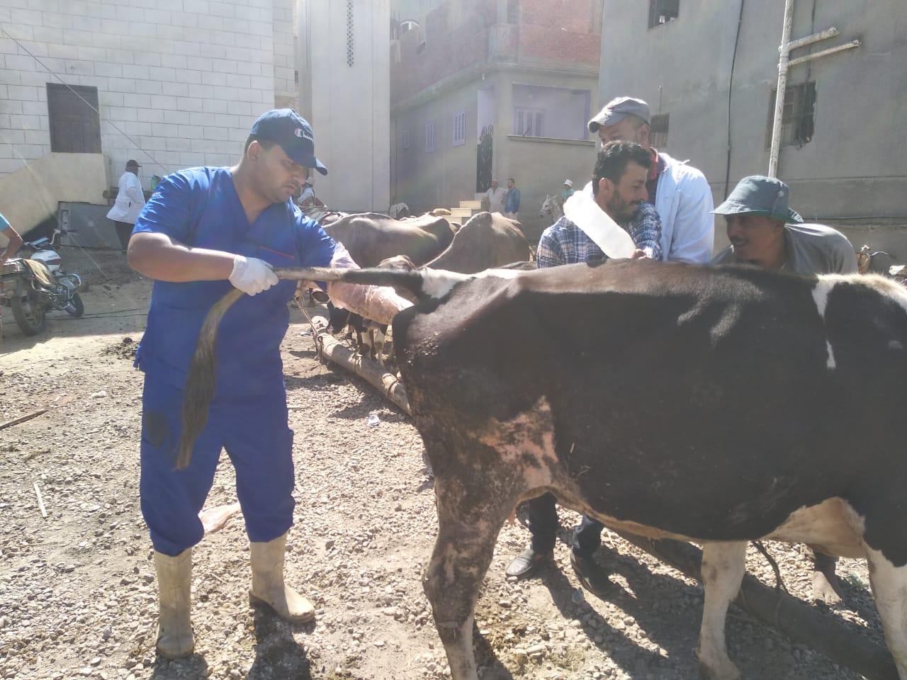 """صورة بالصور.. """"الزراعة"""" تطلق قافلة بيطرية مجانية بقرى محافظة دمياط"""