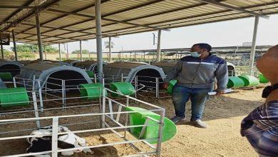 """صورة """"الزراعة"""": 395 ترخيص تشغيل لمشروعات الثروة الحيوانية خلال الاسبوع الماضي ..صور"""