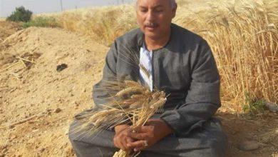 صورة نقابة الفلاحين:  الشرقية تتصدر محافظات الجمهورية فى زراعة القمح