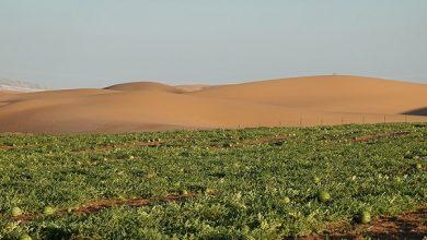 صورة بعد استلام الأرض .. أكاديمية البحث العلمى تبدأ حملة قومية للنهوض بالزراعات الصحراوية