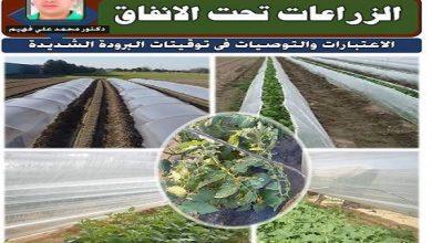 صورة رسائل الدكتور محمد فهيم .. زراعات الخضر تحت الانفاق البلاستيكية