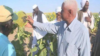 صورة السودان .. والي كسلا: الزراعة هي المخرج الحقيقي من الأزمات