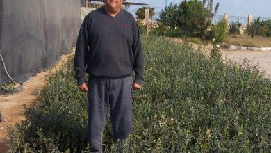 صورة الدكتور وائل غيث يكتب:  الفرق بين فدان زيتون ينتج 8 أطنان واخر ينتج ربع طن في العام  (1- 2)