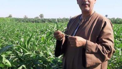 صورة نقيب الفلاحين يطالب  بزيادة المساحات المنزرعه من فول الصويا