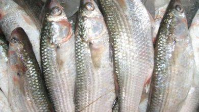 صورة أسعار الأسماك اليوم الخميس 17 يونيه 2021 بسوق العبور