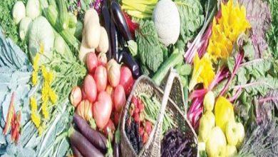 صورة أبو صدام : قانون الزراعه العضويه يحافظ علي البيئة ويفتح أبوابا واسعة أمام الصادرات