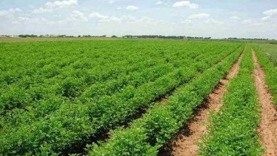صورة 3 بروتوكولاتلاستخدام مساحات زراعية بالوادي الجديد لصالح كفر الشيخ والغربية والمنوفية