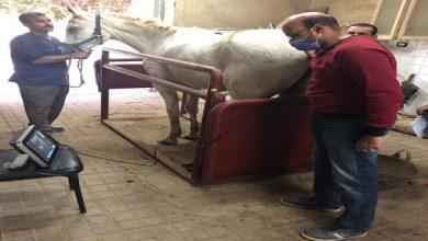 صورة بالصور..  النشاط التدريبي لمعهد التناسليات الحيوانية خلال شهر يونيو