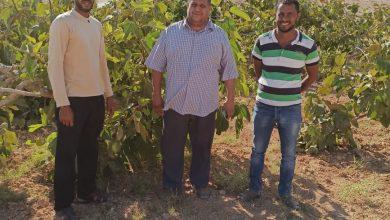 صورة الدكتور وائل غيث يكتب : رعاية أشجار التين تحت الظروف المروية