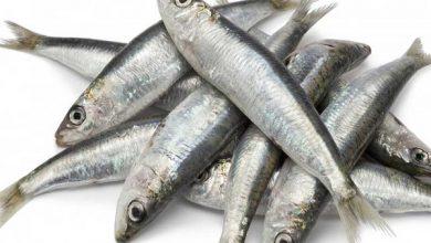 صورة سعر كيلو السردين .. أسعار الأسماك اليوم الثلاثاء 31 أغسطس 2021 بسوق العبور