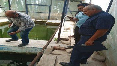 """صورة """"بالصور"""".. معمل بحوث الثروة السمكية يتفقد حديقة الأسماك بالجبلاية تمهيدا لتطويرها"""